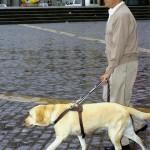 Perro Guia