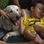 Perro Terapia